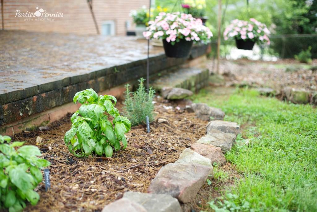 How to Grow An Herb Garden | PartiesforPennies.com | #garden #grow #herbrecipes #tips
