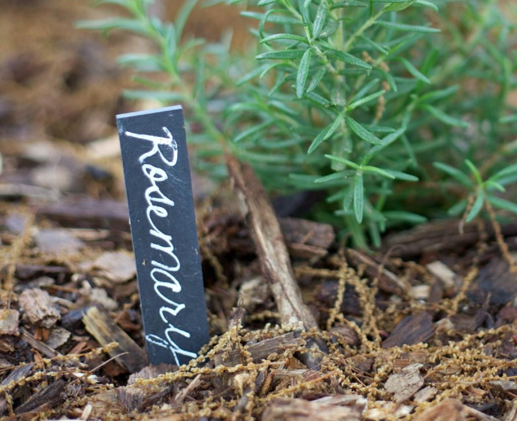 How to Grow An Herb Garden | PartiesforPennies.com | #herbmarker #garden #grow #herbrecipes #tips