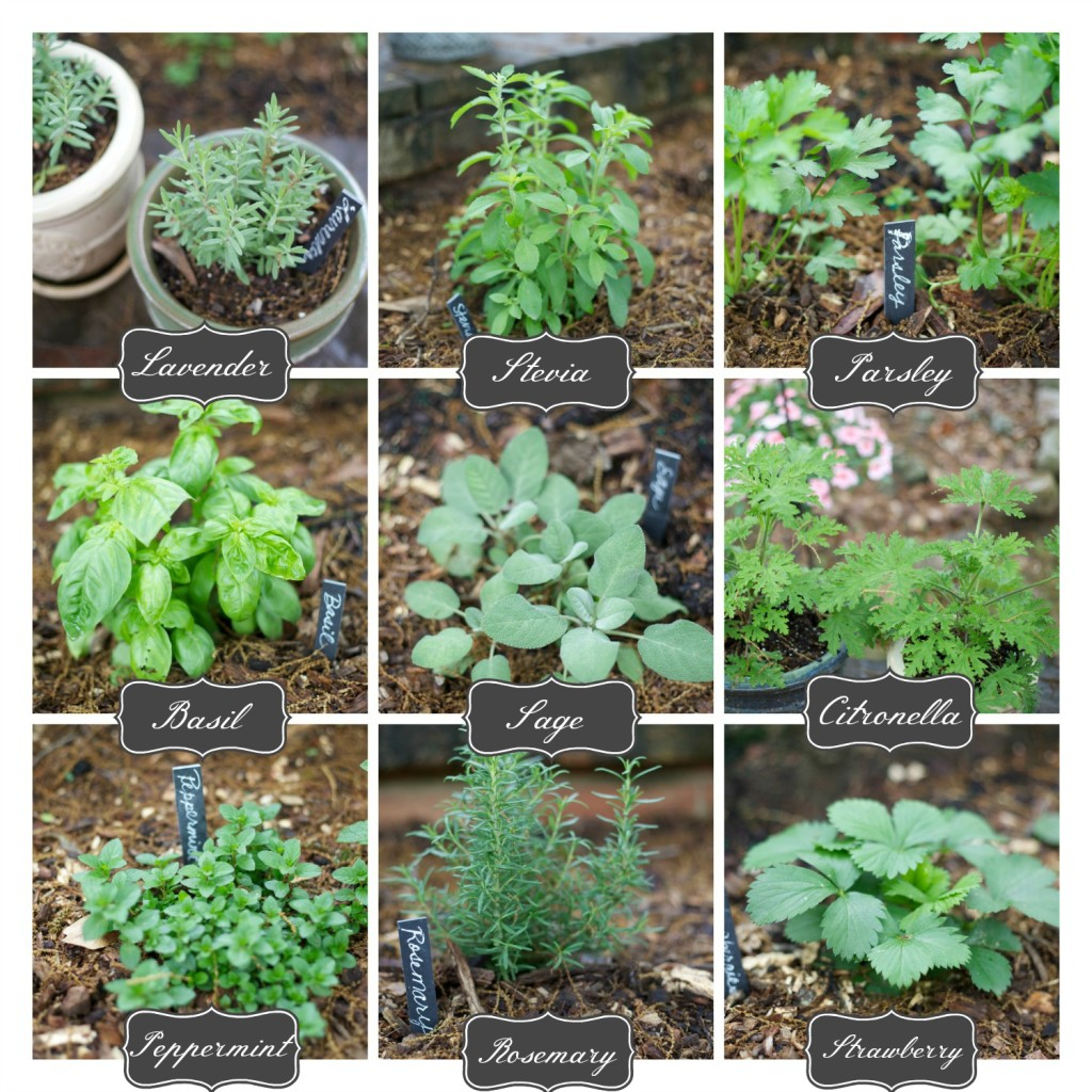 How to Plant an Herb Garden Parties for Pennies