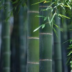 Bambu-7-Inch-Round-Veneerware-Plates-Package-of-25-0-0